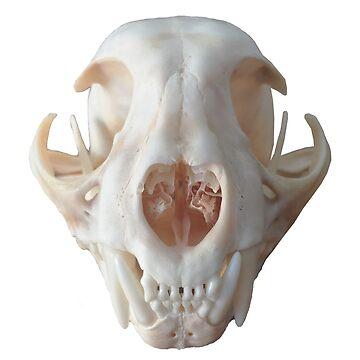 Cat Skull by alienbabe100