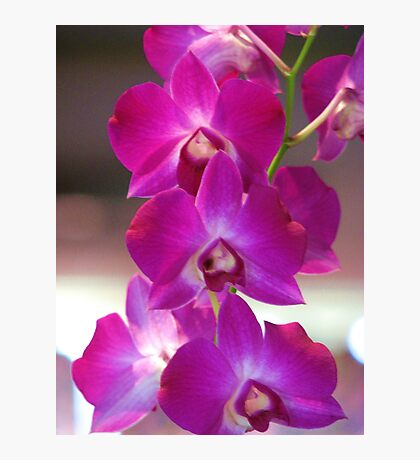 Orchid Overflow  Photographic Print