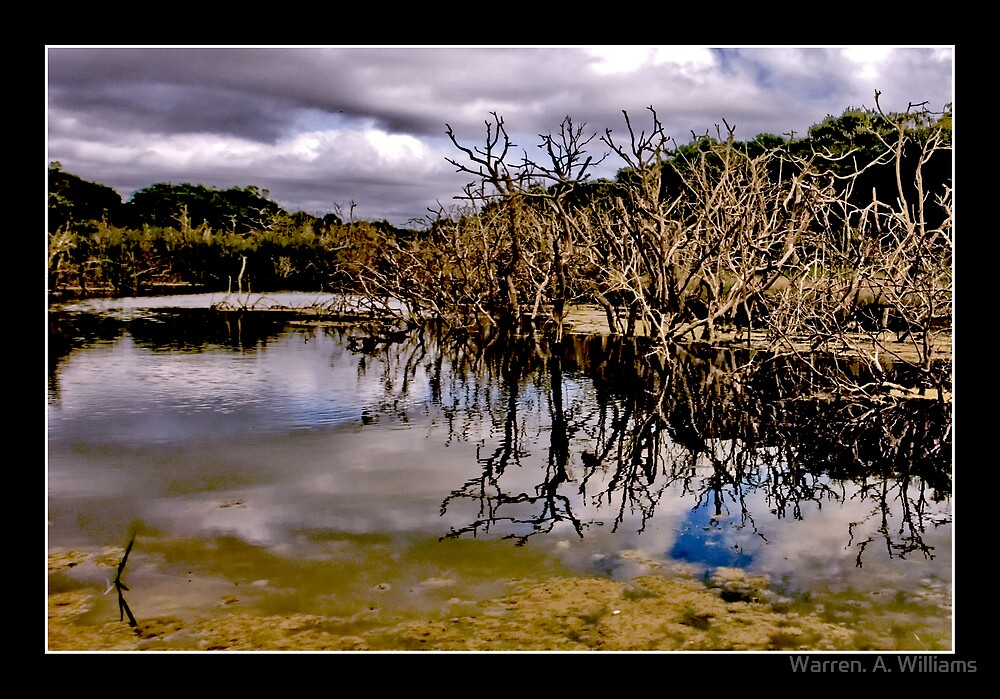 Reflections by Warren. A. Williams