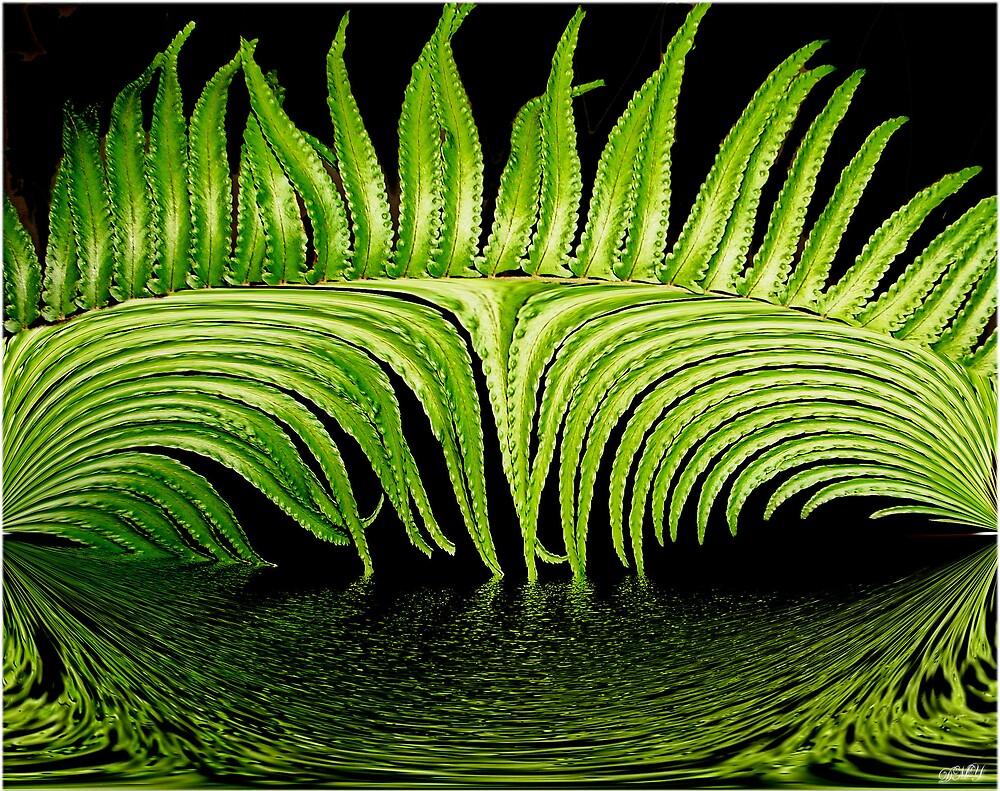 Abstract Fern by shadyuk