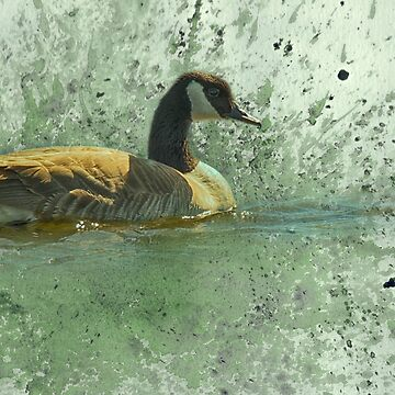 Canada Goose, digital art by montanaartist