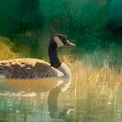Canada Goose, digital art by Donna Ridgway by Donna Ridgway