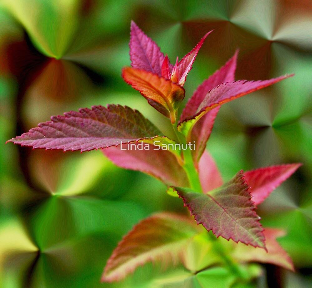 red leaf by Linda Sannuti