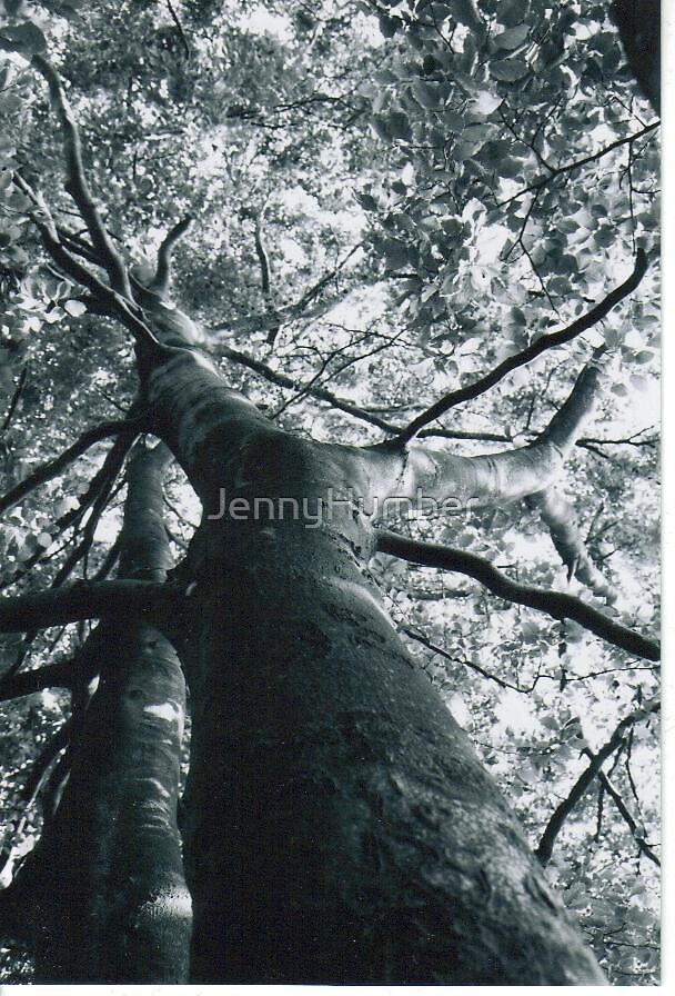 Tree in Black and White by JennyHumber