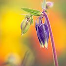 Columbine macro by alan shapiro