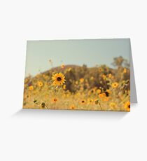 Many Flowers Greeting Card