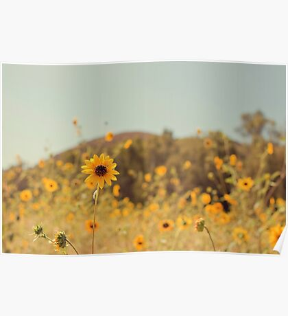 Many Flowers Poster