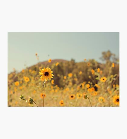Many Flowers Photographic Print