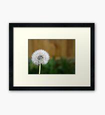 Dandelion Puff Wish Framed Print