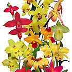 Orchids - Hot Colors!  On white by rvjames