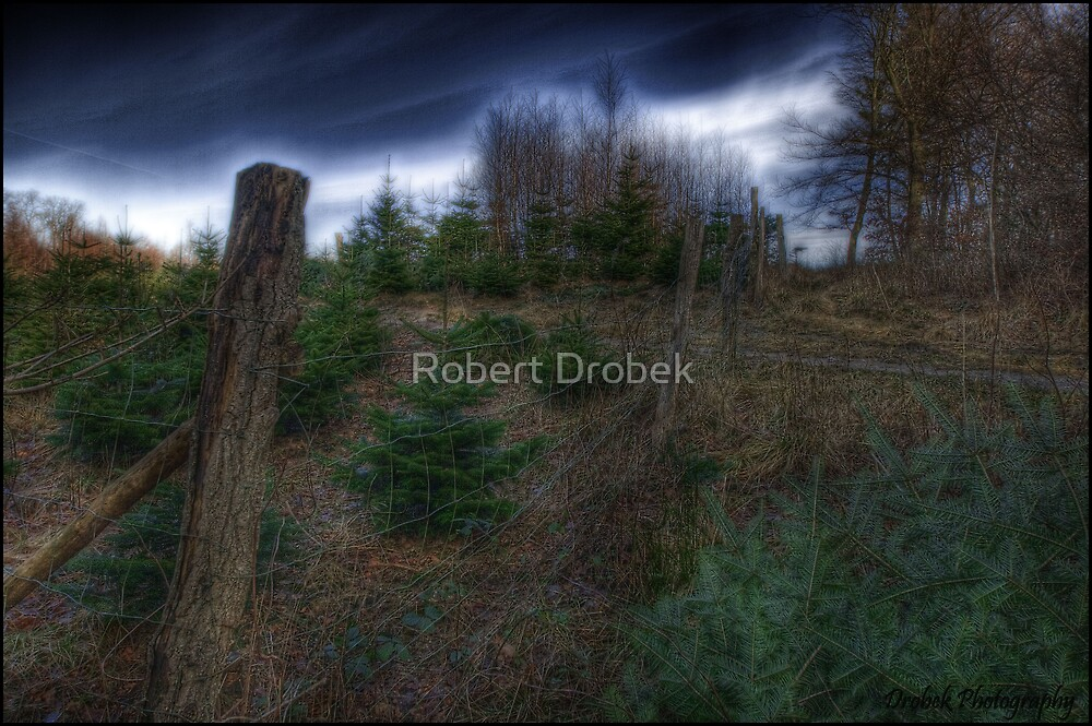 In the Woods Part 2 by Robert Drobek