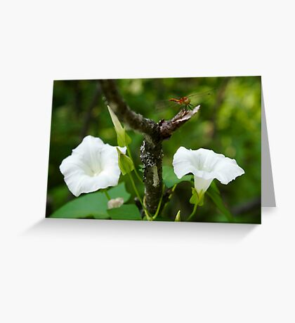 morning glory with Dragonfly Greeting Card