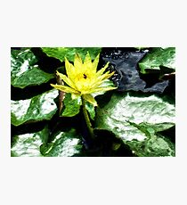 McQuade Park Waterlilies Photographic Print