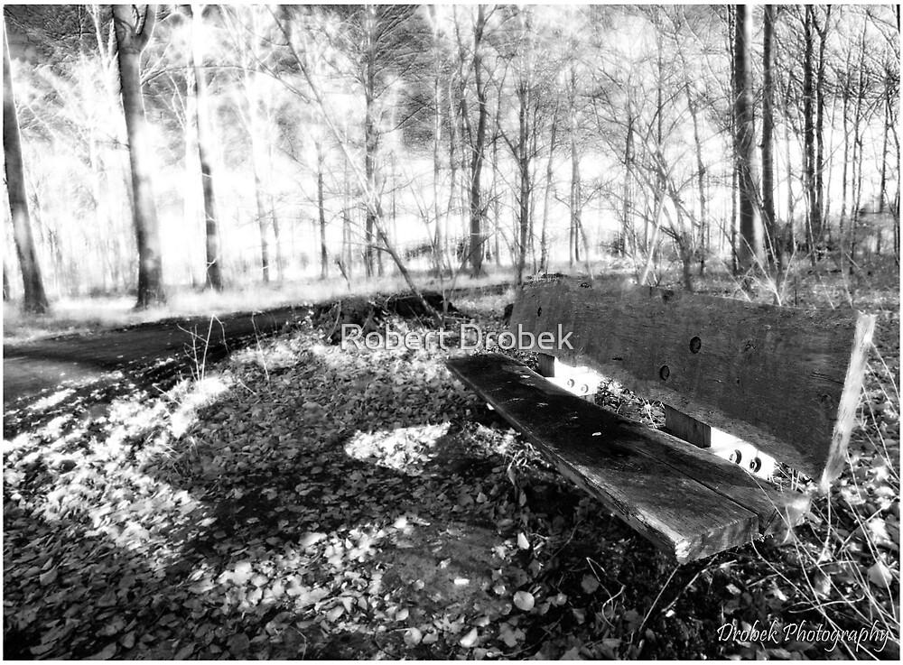The Bench by Robert Drobek