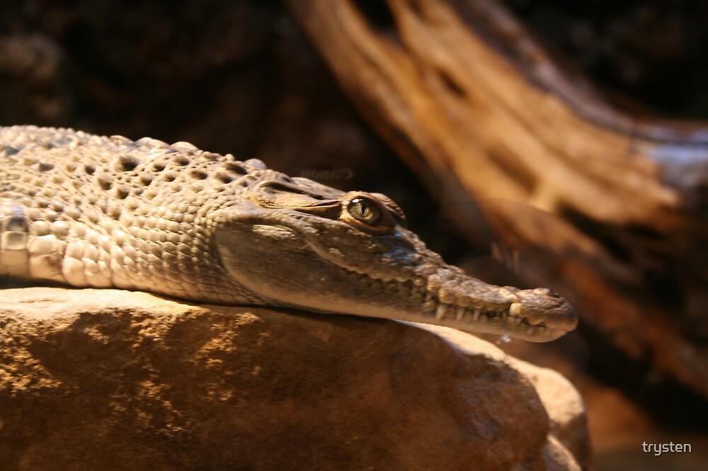 gator by trysten