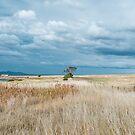Swansea, Tasmania by Pauline Tims