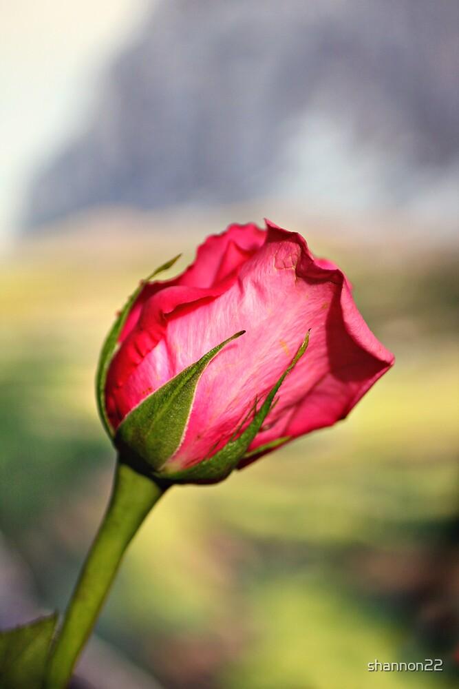 bokeh flower by shannon22