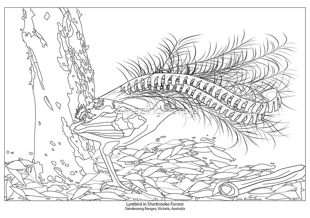 Lyrebird, Schwarz-Weiß-Illustration. Kunstdruck, Poster zum Ausmalen ...