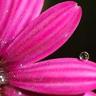 pink drop by brilightning
