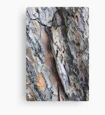 Close up of bark on tree Canvas Print