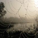 Spider's Morning by Rebecca Cruz