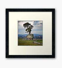 1564 Old tree and bolder Framed Print