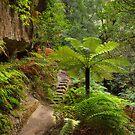 Canyon Trail by Michael Matthews