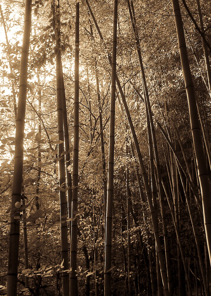 Old Bamboo by Kobalt