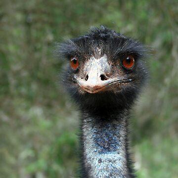 Emu by SuzyB
