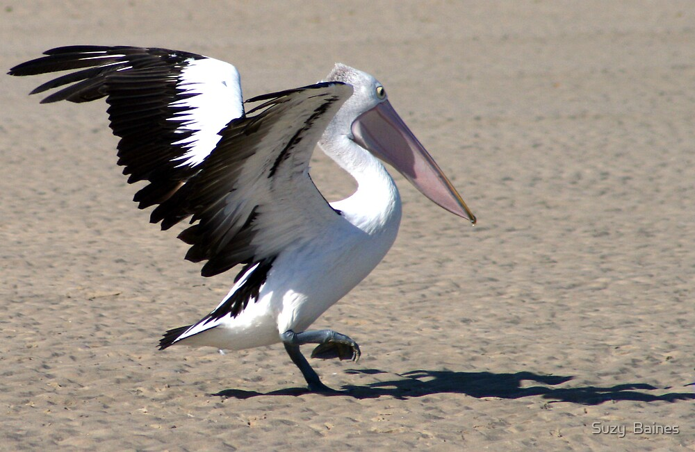 Pelican   by Suzy  Baines
