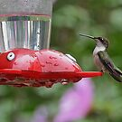 Hummer Fun by Betty Maxey