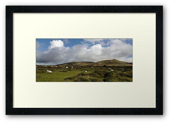 Sheep on Dartmoor by Alex Wagner