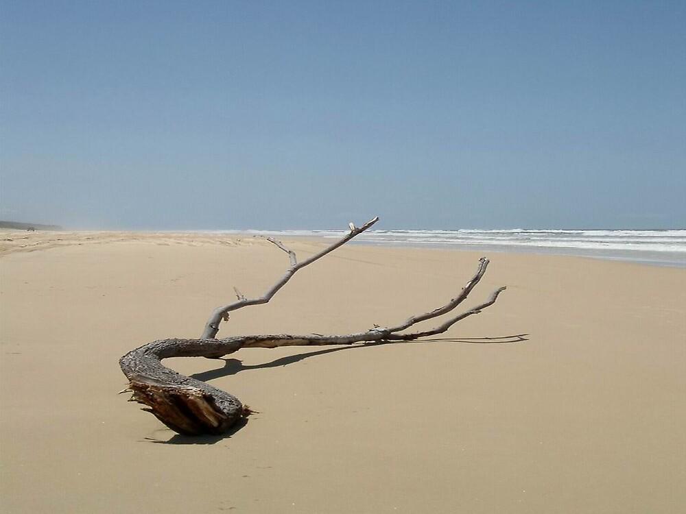Branch on beach by EmmaNation