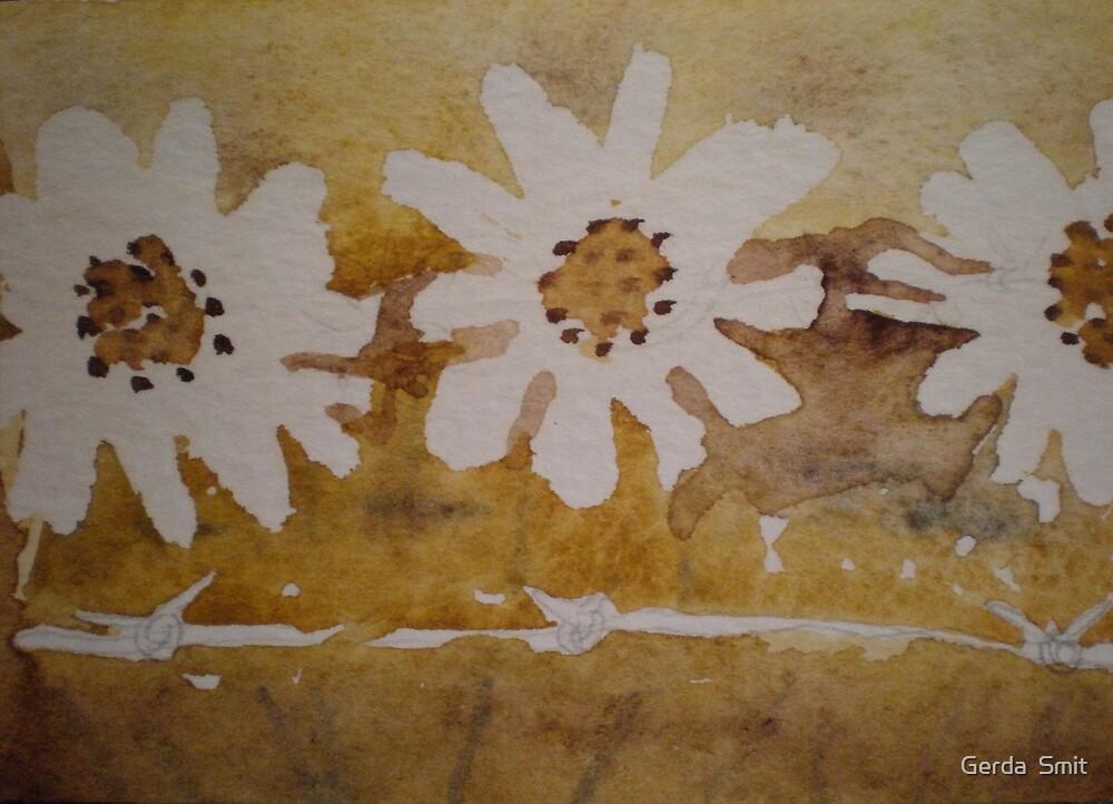 wight daisys by Gerda  Smit