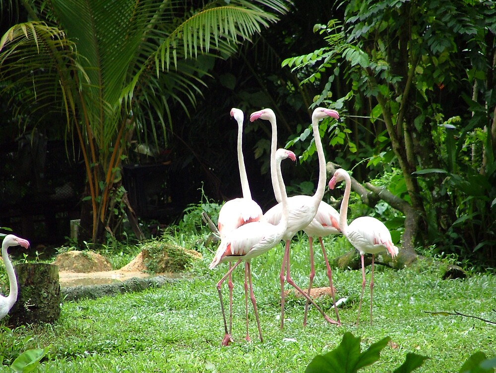 Flamingos 1 by Dieselsmum