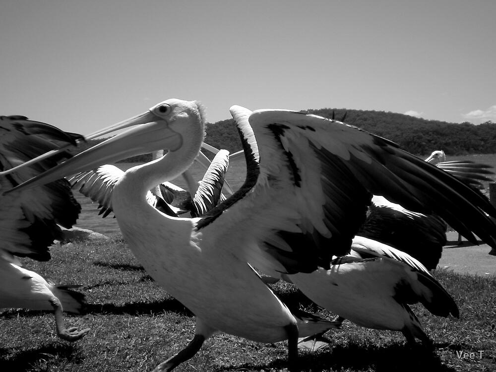The Pelican Run 2 by Vee T