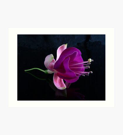 Fuchsia V Art Print