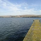 Tomales Bay by WillowTeaHouse