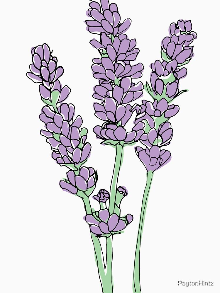 Lavendel-Illustration von PaytonHintz