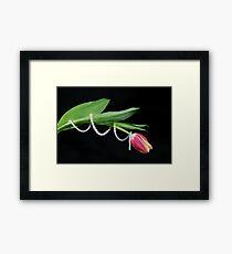 Tulip Twist Framed Print