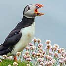 Squawker by Alan Forder