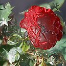plastic wrapped rose by nakomis