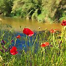 Poppies By The River by jean-louis bouzou