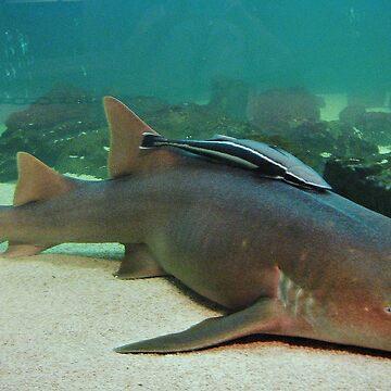 Shark by venny