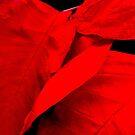 Really Red by Rosemary Sobiera