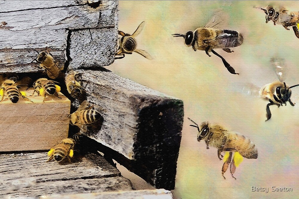 My Bees 2017 by Betsy  Seeton