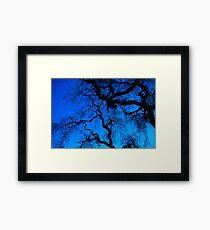 Oak trees Framed Print