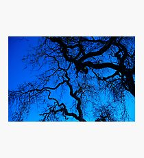 Oak trees Photographic Print