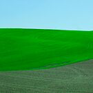 Fields of Tuscany by Andriy Portyanko