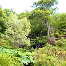 Dunvegan Castle Gardens by Tom Gomez